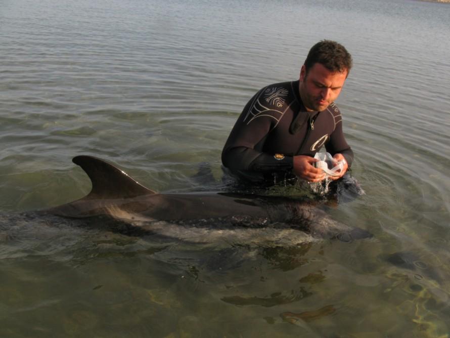 Παναγιώτης Τασιαδάμης σε επιχείρηση διάσωσης δελφινιού στην Λαυρεωτική