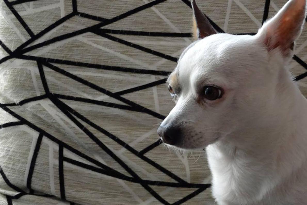 Ιδού και πρώτη φωτογραφία -το σκυλάκι του- που τράβηξε ο νικητής με τον καινούργιο του φακό!