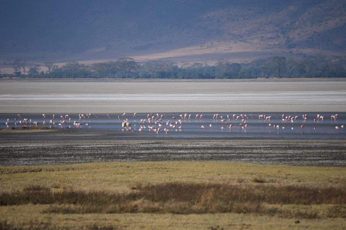 Ngorongoro Crater, Tanzania. Ο κρατήρας Ngorongoro αποτελεί τη μεγαλύτερη ανενεργή και ανέπαφη ηφαιστειακή καλντέρα στον κόσμο. Έχει βάθος 600 μέτρα και διάμετρο 20χλμ., ενώ αποτελεί προστατευόμενη περιοχή, λόγω του μοναδικού οικοσυστήματος. Στο κέντρο του κρατήρα βρίσκεται μια υφάλμυρη λίμνη με φλαμίνγκο,  η οποία κατά τη περίοδο των βροχοπτώσεων καταλαμβάνει την τριπλάσια έκταση.