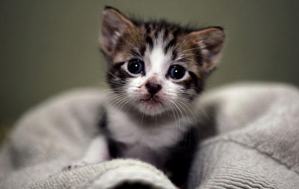 Top 5 ποιήματα για τις γάτες