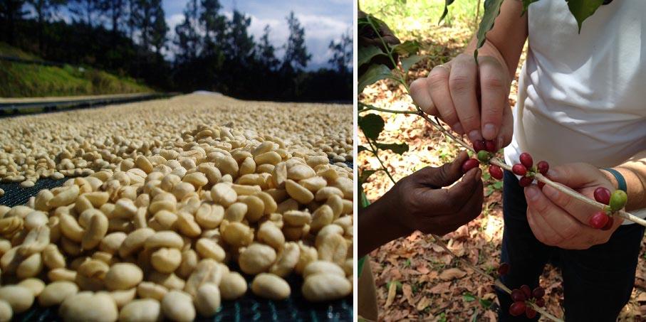 beans-10