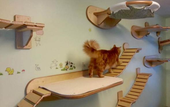 Ένας ντιζάϊν παιχνιδότοπος για γάτες στον τοίχο σας