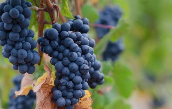 Top 5 ελληνικά Pinot Noir
