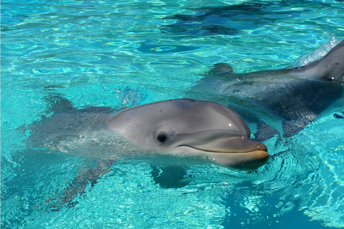 dolphin-point-dolphin-seaworld-san-diego