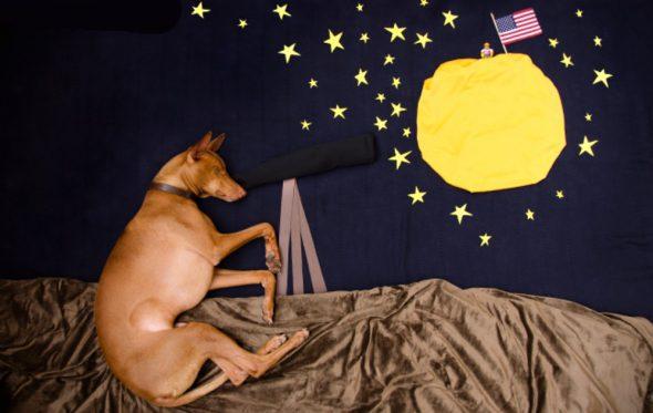 Δέκα τρόποι για να γίνεις ο καλύτερος φίλος του σκύλου σου