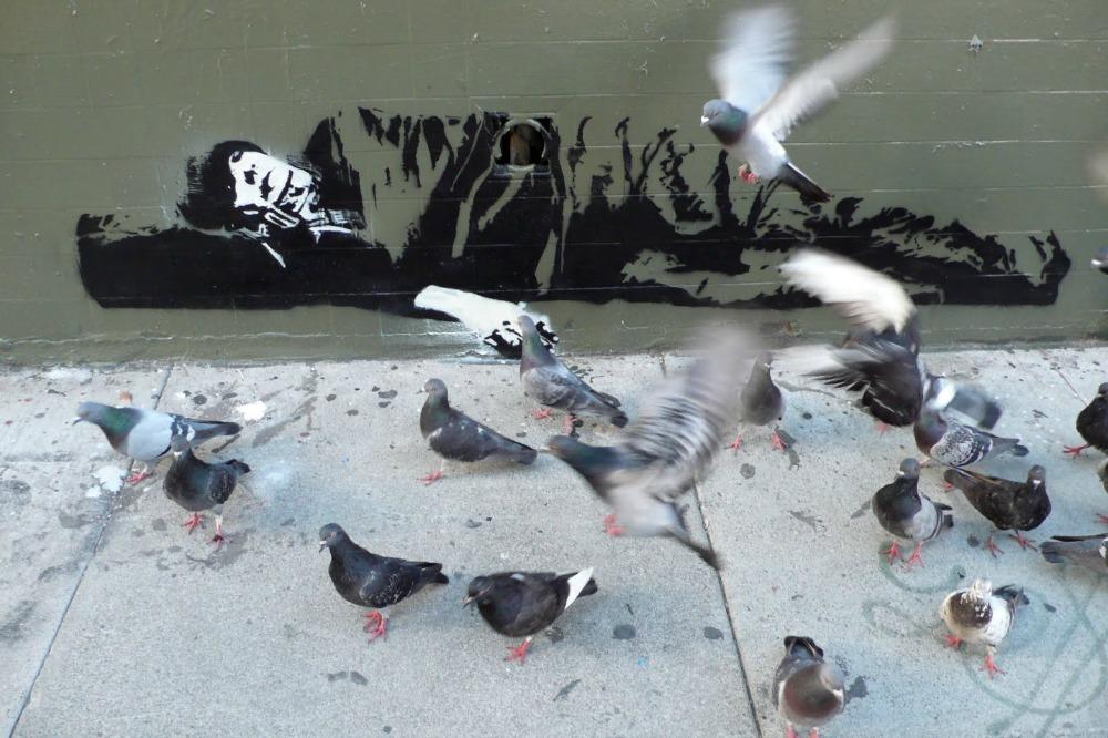 blak_le_rat_pigeons
