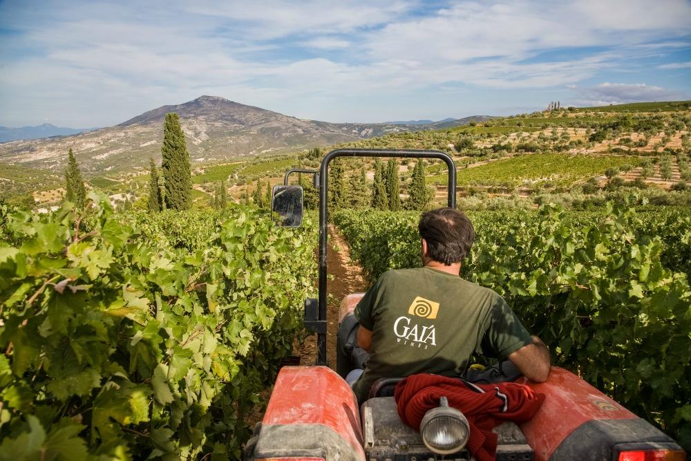 37532dfe97b3 9. Nemea vineyards