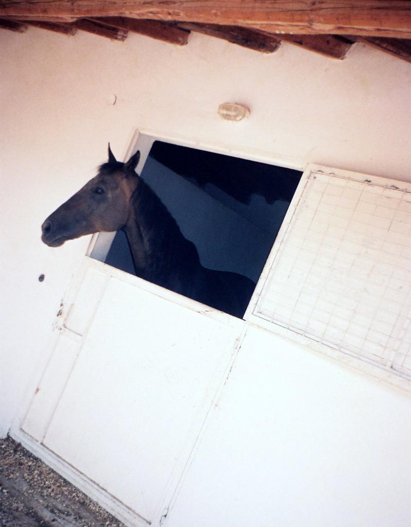 Στο κτήμα της, το άλογό της το αγαπημένο. (Φωτογραφία Σωτήρης Κακίσης)