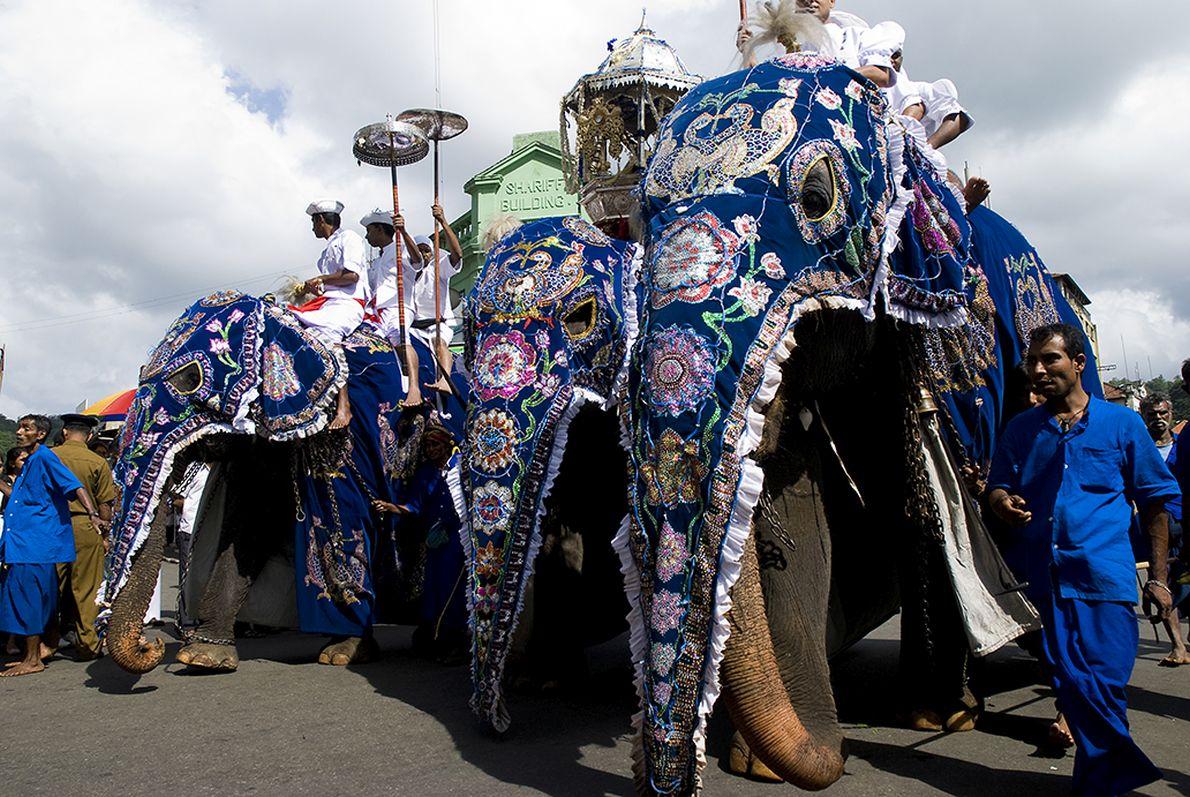 Η πομπή των ελεφάντων στην γιορτή της Εσάλα Περχέρα στην Σρι Λάνκα.
