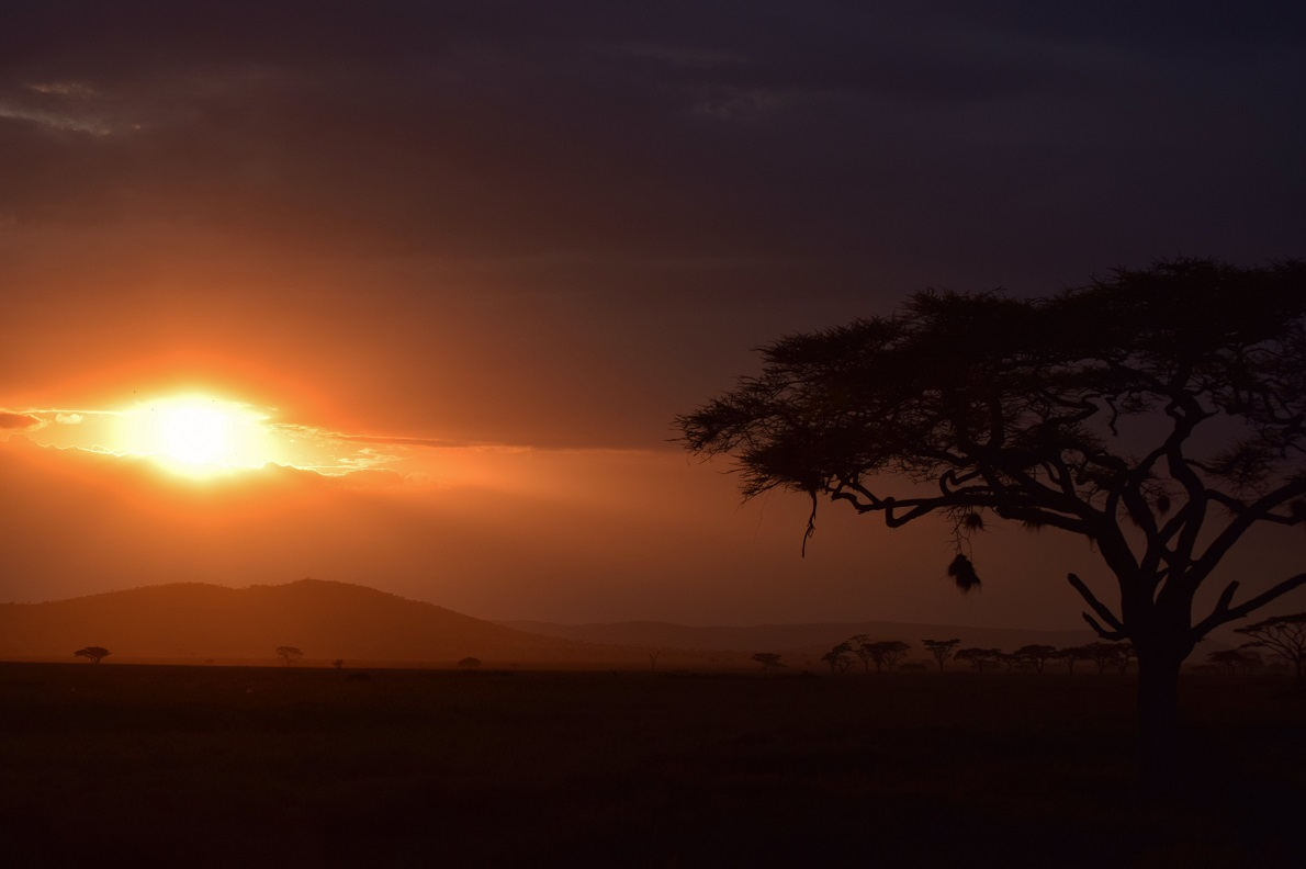 Seronera, Serengeti National Park, Tanzania.  Η λέξη Serengeti σημαίνει ατελείωτη πεδιάδα, αλλά υπάρχει εναλλαγή τοπίων σε αποστάσεις μικρότερες των 50χλμ. Η συννεφιά, εν προκειμένω, δεν μας επέτρεπε για αρκετή ώρα να δούμε τι υπήρχε γύρω μας, μέχρι που μια τρύπα μας βοήθησε να παρακολουθήσουμε το ωραιότερο ηλιοβασίλεμα που είχαμε δει. Οι εικόνες και τα χρώματα δεν μπορούν να αποτυπωθούν σε μια φωτογραφία.