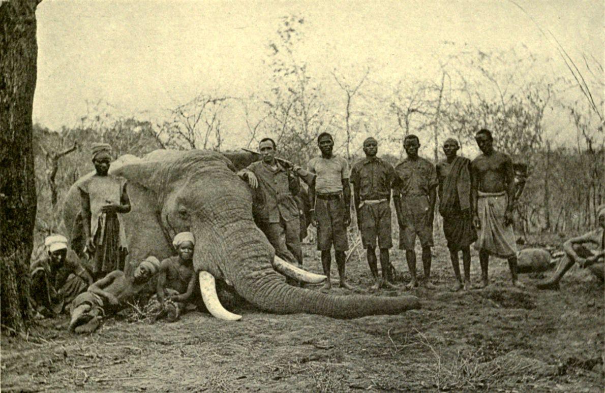 Κυνήγι ελέφαντα στη Μπανγκάλα. Ρhoto James Sutherland, London Macmillan Publishers 1912