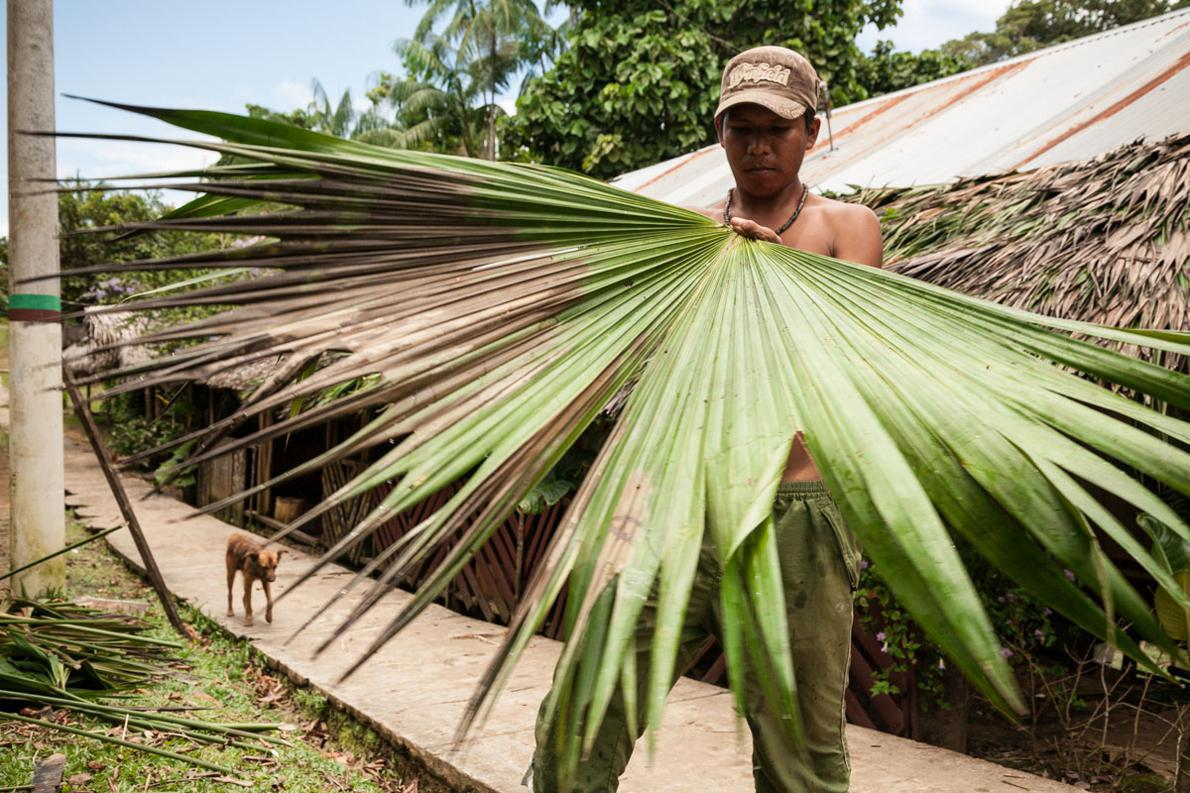Αν θέλουμε να μάθουμε από αειφόρο ανάπτυξη καλύτερα να θητεύσουμε δίπλα στους Ινδιάνους του Αμαζονίου. Τίποτα από την ζούγκλα δεν πετιέται. Όλα είναι χρήσιμα.