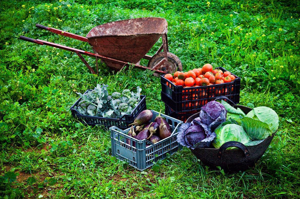 «Δεν αρκεί να διαφημίζουμε αγρότες που κοιτάνε νοσταλγικά τη γη τους και πιάνουν το σιτάρι με τα ροζιασμένα χέρια τους. Χρειαζόμαστε μια στρατηγική που σταδιακά θα φέρει τα ελληνικά προϊόντα στη θέση που τους αξίζουν στις αγορές του κόσμου». Photo: NickChino/flickr