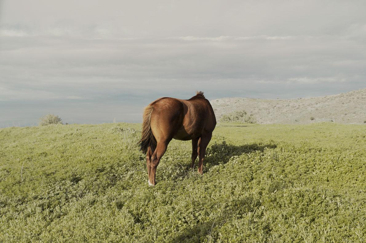 """""""Unicorno"""""""