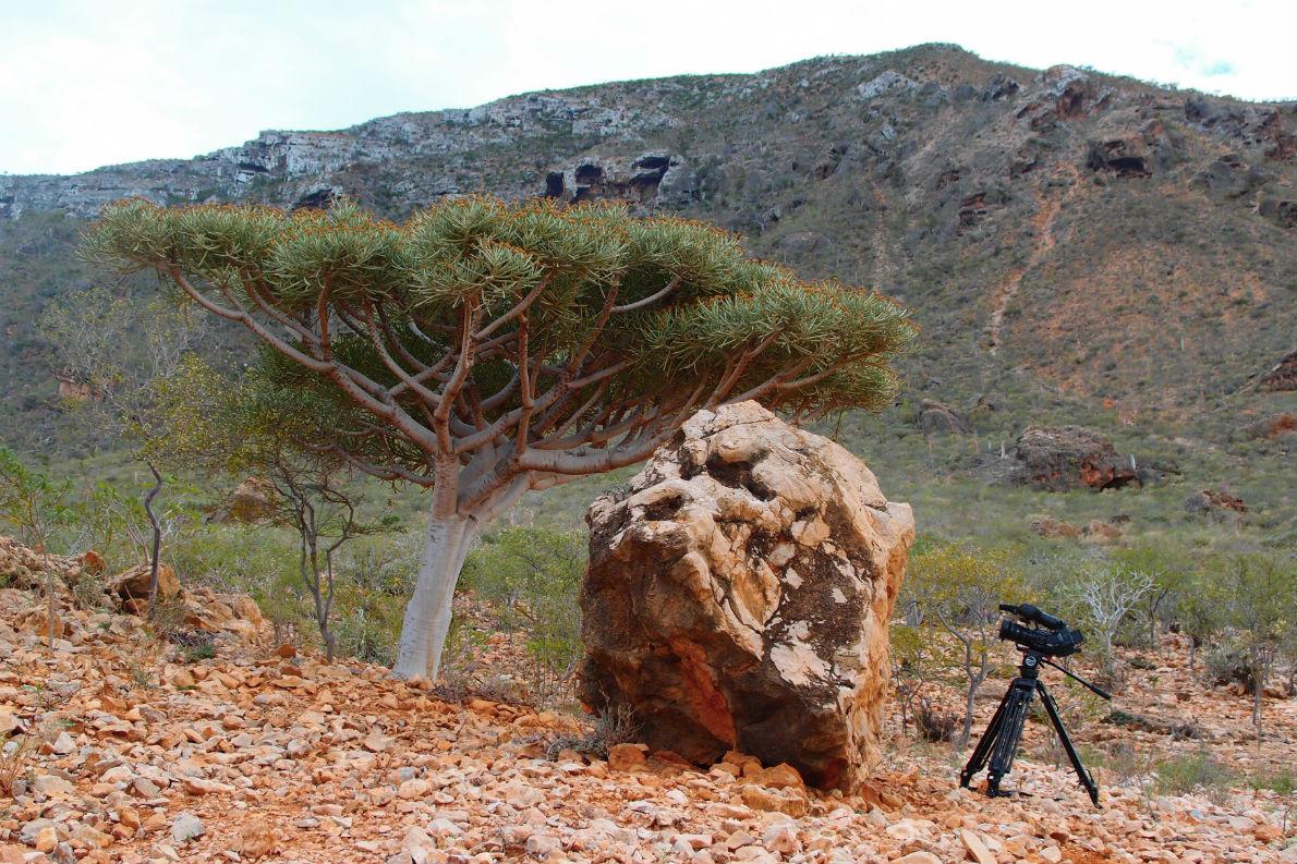 Τα γυρίσματα του «Unknown Land» πραγματοποιήθηκαν στο Ισραήλ και στο νησί Σοκότρα της Υεμένης (φωτογραφία). Είναι η πρώτη ταινία μεγάλου μήκους που έχει γυριστεί ποτέ στη Σοκότρα.