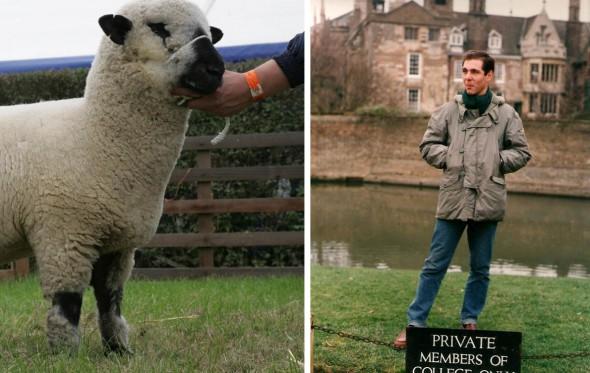 Βόσκοντας πρόβατα στη Νότια Αγγλία
