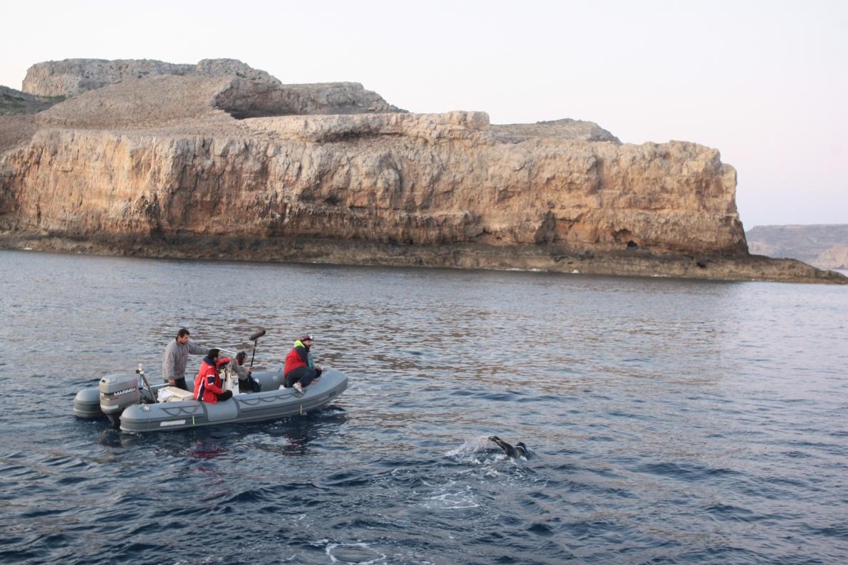 Πλησιάζοντας ‒μετά από 101 χιλιόμετρα κολύμβησης‒ στην Κρήτη. «Όταν επιτέλους πάτησα στα κοφτερά βράχια του ακρωτηρίου της Κισσάμου, τα πόδια μου σκίστηκαν και μάτωσαν», θυμάται. «Με γοήτευσε που βγήκα σε άγριο τοπίο ‒το θεώρησα ένα πολύ ταιριαστό τέλος της διαδρομής μου αυτό».