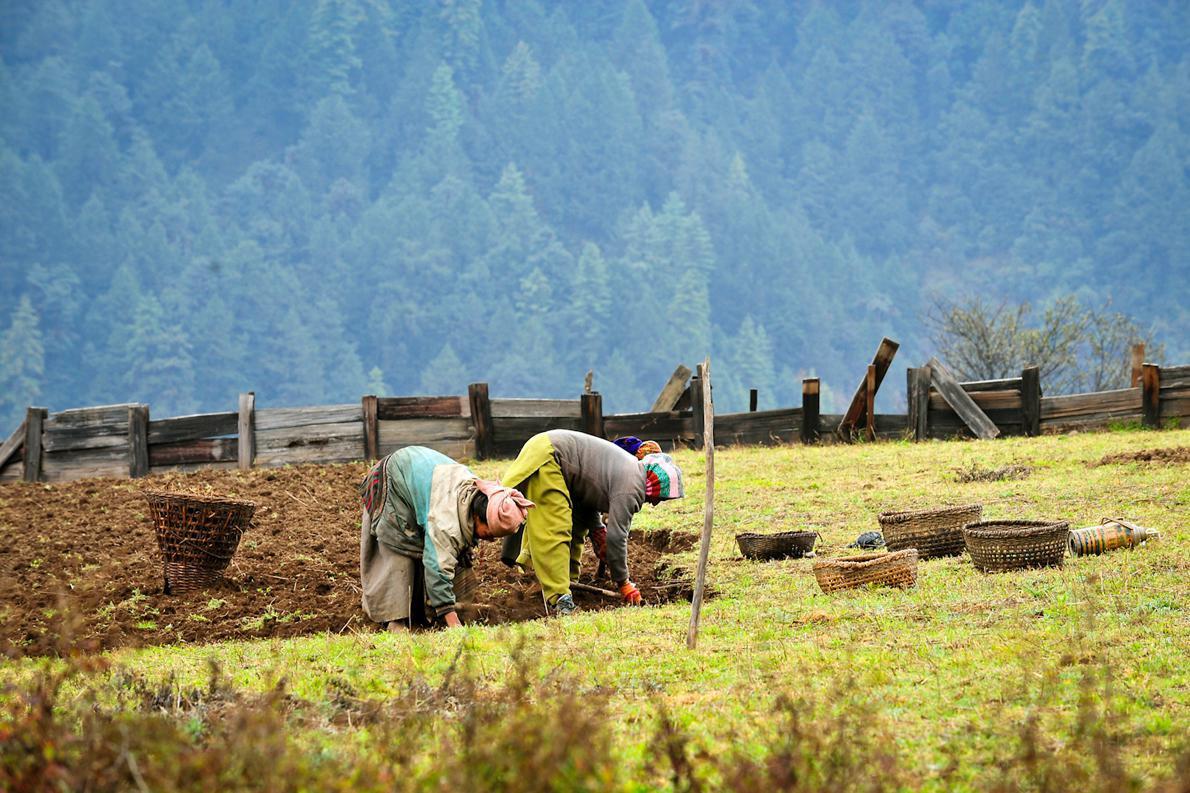Τις αγροτικές εργασίες αναλαμβάνουν οι γυναίκες, αφού οι περισσότεροι άντρες δουλεύουν σαν αχθοφόροι.