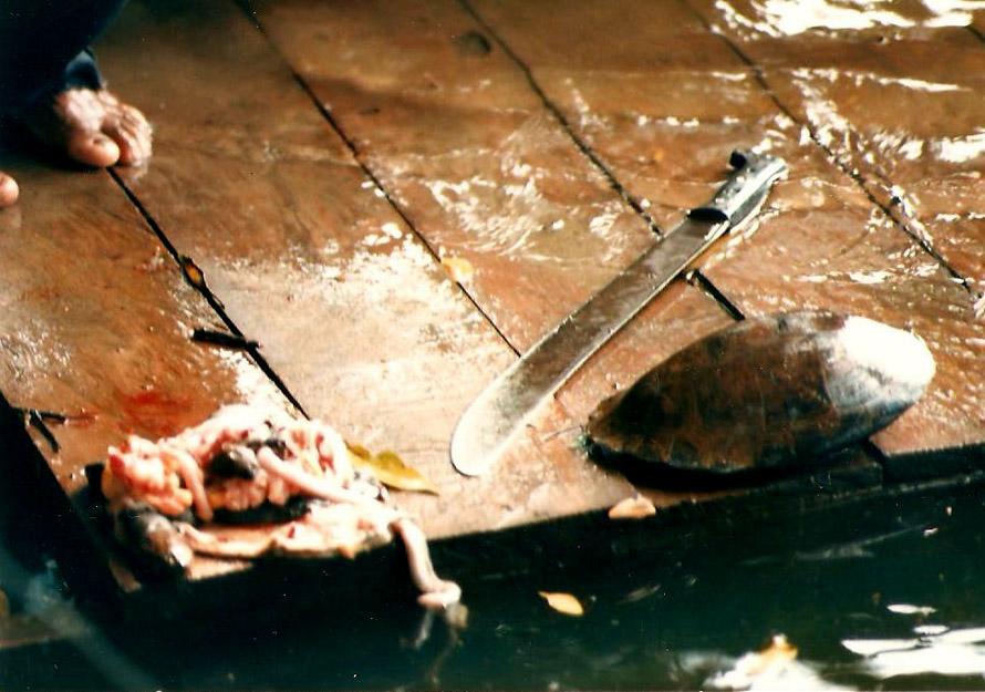 Ο οδηγός της lancha έφαγε τη χελώνα του ωμή και άφησε το καύκαλο να το βλέπουμε. Φωτό Κ.Γκόφας 1988