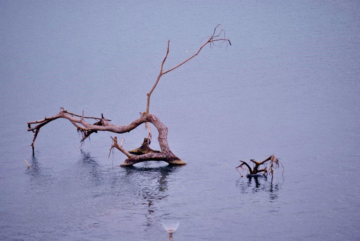 Κορμοί δένδρων επιπλέουν στα παράλια του Τάκλομπαν. Τα γιγαντιαία κύματα, ύψους 4 έως 8 μέτρων, εξαφάνισαν μέσα σε μια μέρα την πόλη, αφήνοντας πίσω τους χαλάσματα και εκατοντάδες πτώματα ανάμεσα στα ισοπεδωμένα σπίτια.