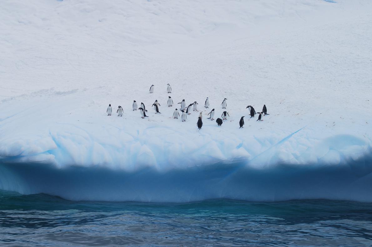 Οι πιο θορυβώδεις κάτοικοι της Ανταρκτικής