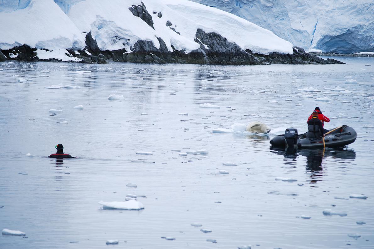 "Scuba diving με ειδική, ""στεγνή"" στολή (dry suit). Χωρίς αυτή είναι αδύνατο να επιβιώσεις στα παγωμένα νερά της Ανταρκτικής"