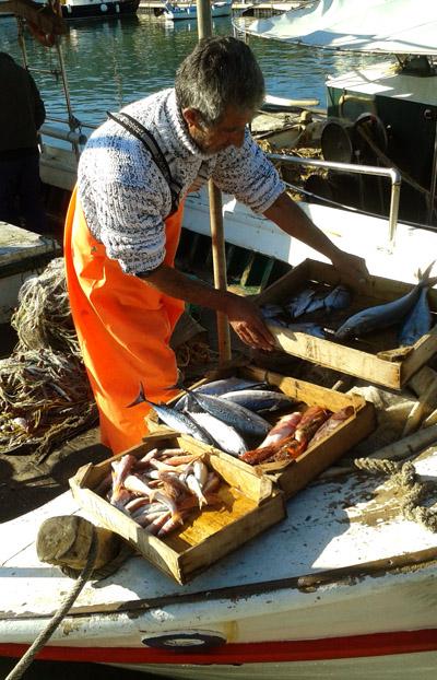 «Το ψάρι που υπάρχει πάντα σε αφθονία, φτηνή τιμή (λόγω της αφθονίας) και υπέροχη γεύση, κυρίως αυτήν την εποχή, είναι η μαρίδα». Φωτογραφία: Χάρης Τζίτζης